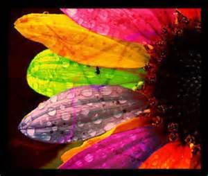 Flower thCAH1JSOS